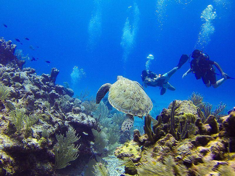 Vela-y-trabajo-en-equipo-Islas-virgenes-curso-de-ingles-ASTEX--2