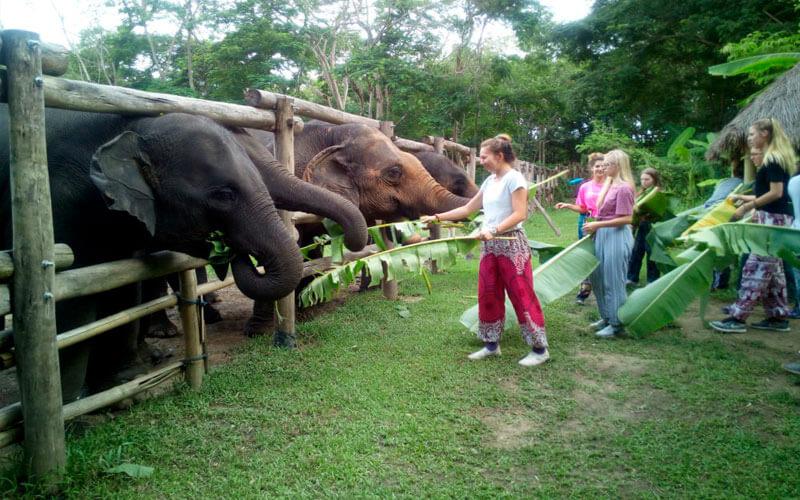 voluntariado en Tailandia proyecto con elefantes ASTEX