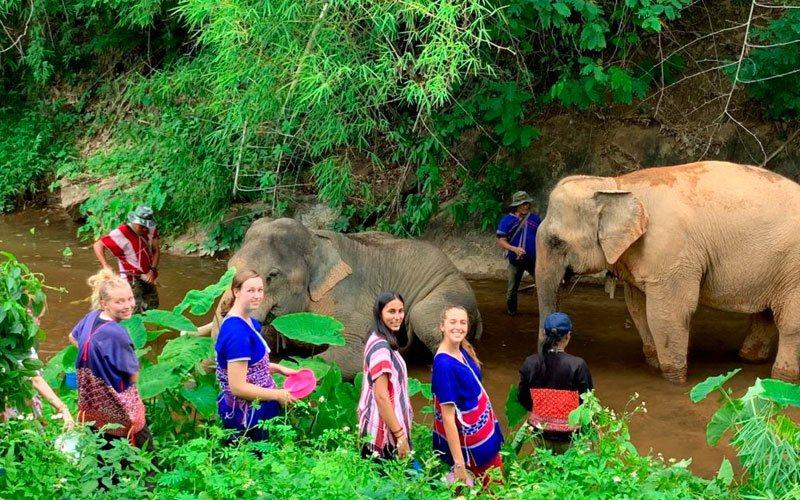 voluntariado en Tailandia santuario de elefantes ASTEX